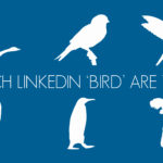 Which of the 6 LinkedIn 'Birds' Are You?